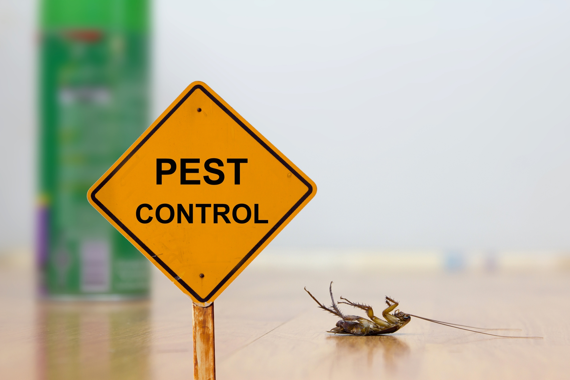 24 Hour Pest Control, Pest Control in Totteridge, Whetstone, N20. Call Now 020 8166 9746